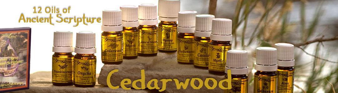 Twelve Oils of Ancient Scripture - Cedarwood Essential Oil