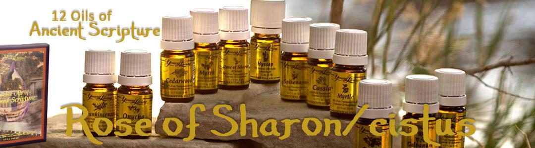Twelve Oils Of Ancient Scripture - Rose of Sharon/Cistus Essential Oil